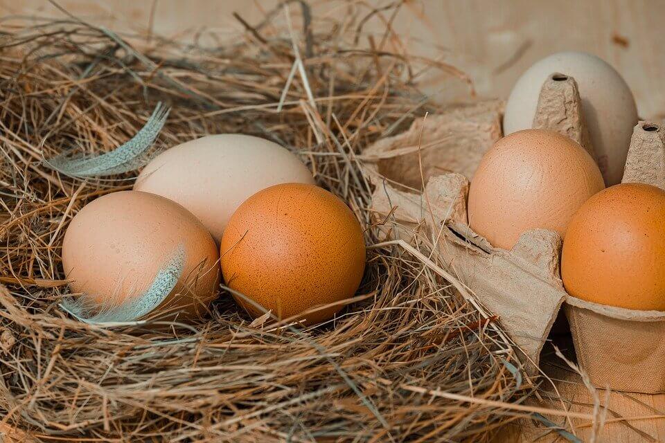Ukuran Lampu Bohlam yang Dipasang di Tempat Penetas Telur