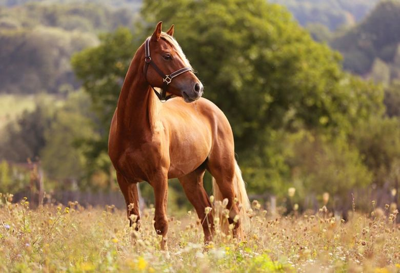 Keeping Your Horse's Field Well-balanced