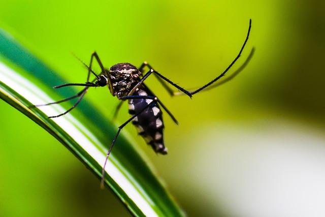 Metamorfosis Nyamuk: Penjelasan, Proses, dan Jenis-Jenis Nyamuk
