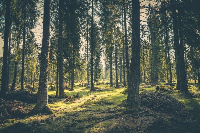 Macam-macam hutan