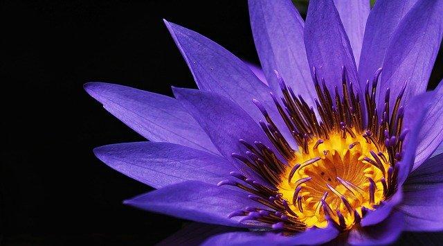 Bunga Termahal Di Dunia